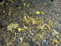 BVB Dortmund - 1. FSV Mainz 05