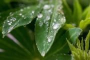 Woche 21 - Regen