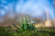 Woche 10 - Die Natur erwacht