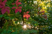 Woche 42 - Herbst