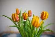 Woche 9 - Frühlingsgruss
