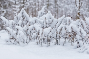 Woche 4 - Winterwunderland
