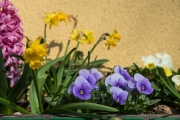 Woche-15-Frohe-Ostern