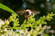 Woche-26-Biene