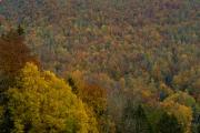 Woche-44-Herbst