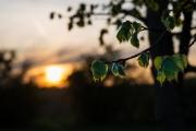 Woche-19-Sonnenuntergang