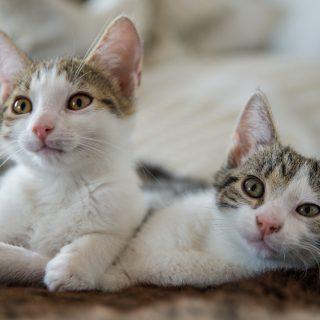 Fanny & Mika